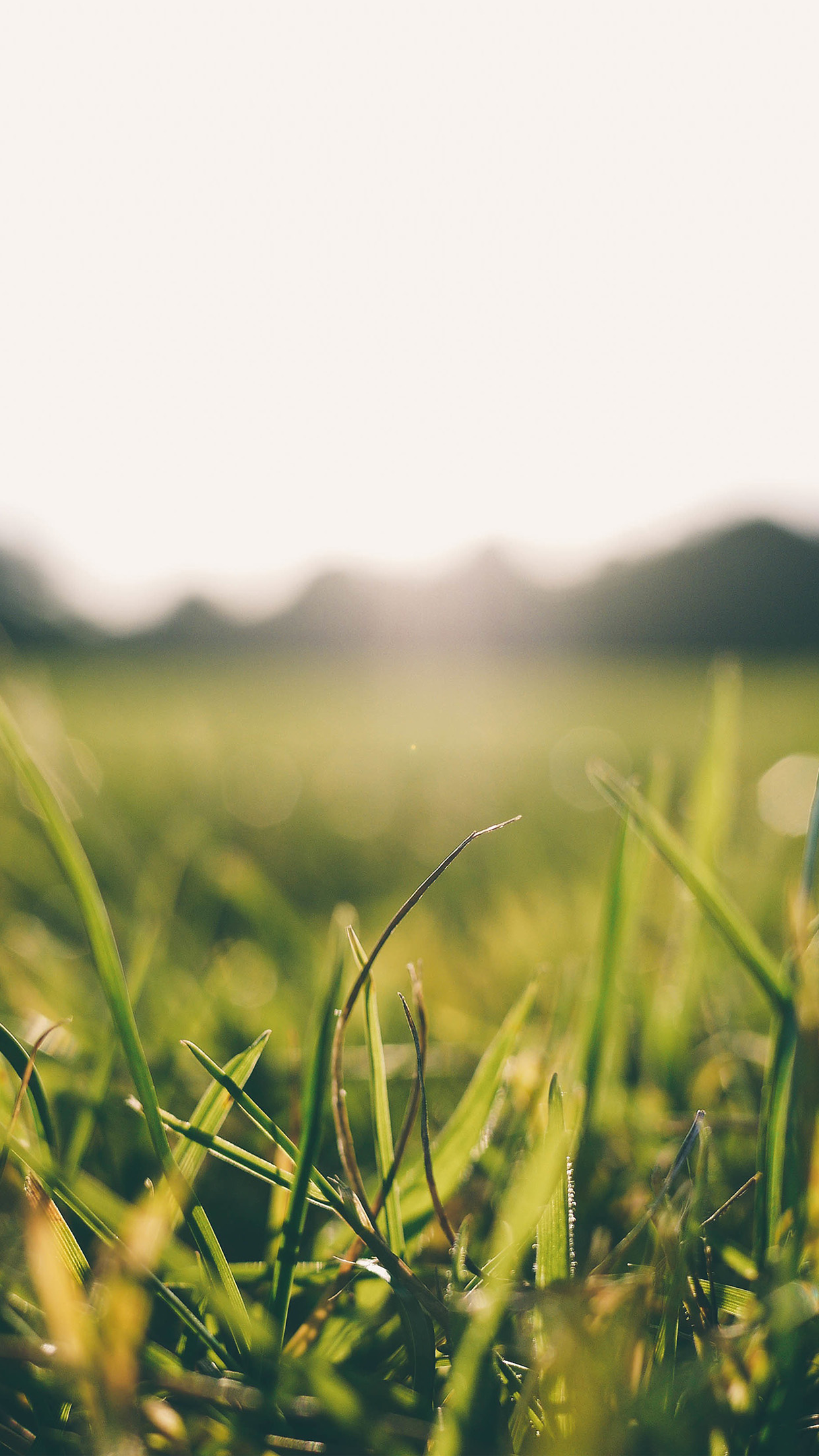 Grass Green Bokeh Light Summer Nature Android wallpaper
