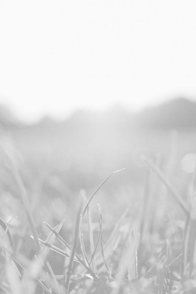 Grass White Bokeh Light Summer Nature Android wallpaper
