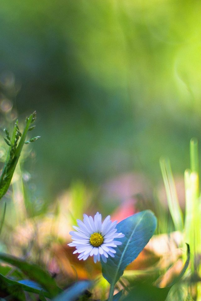 Green Lawn Flower Bokeh Nature Android wallpaper