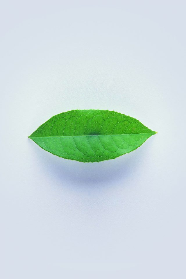 Green Leaf Minimal Nature Art Android wallpaper