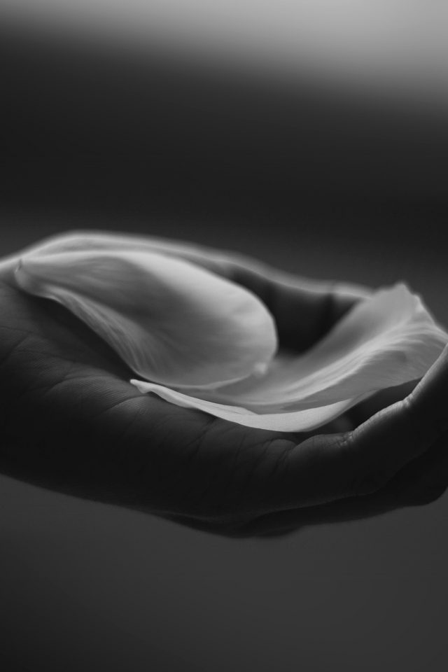 Hand Flower Dark Bw Human Nature Android wallpaper