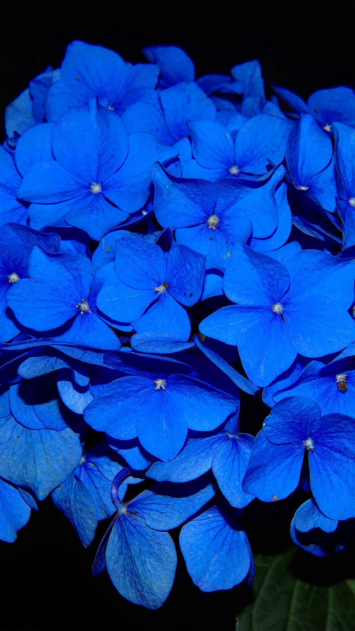 Hydrangea Blossom Flower Blue Dark Nature Android ...