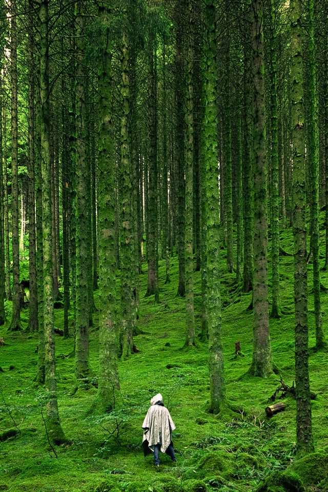 In Wood Forest Green Mountain Nature Android wallpaper