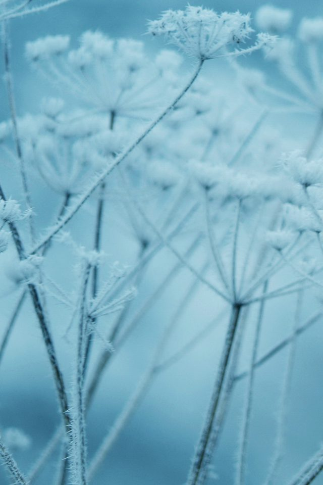 Ipad Snow Winter Flower Blue Nature Bokeh Android wallpaper