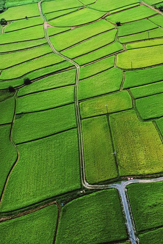 Japan Rice Paddy Field Nature Android wallpaper