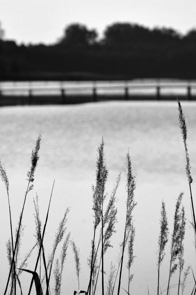 Lake View Flower Water Calm Nature Bokeh Dark Bw Android wallpaper