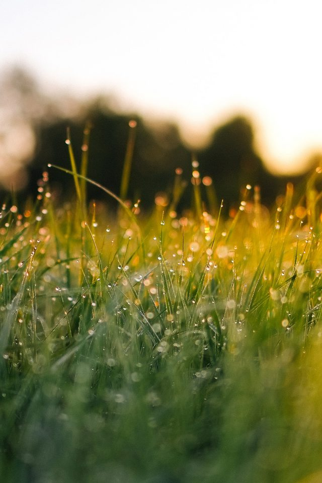 Lawn Green Nature Sunset Light Bokeh Sprin Android wallpaper