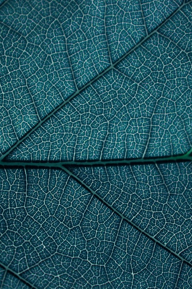 Leaf Blue Dark Nature Texture Pattern Android wallpaper