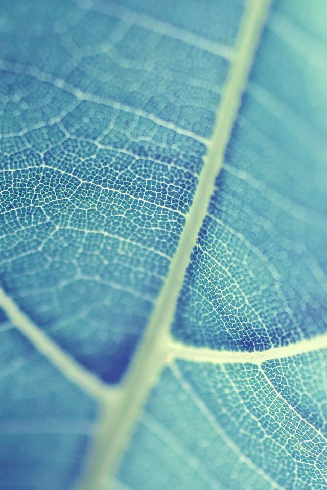 Leaf Bokeh Blue Nature Android wallpaper