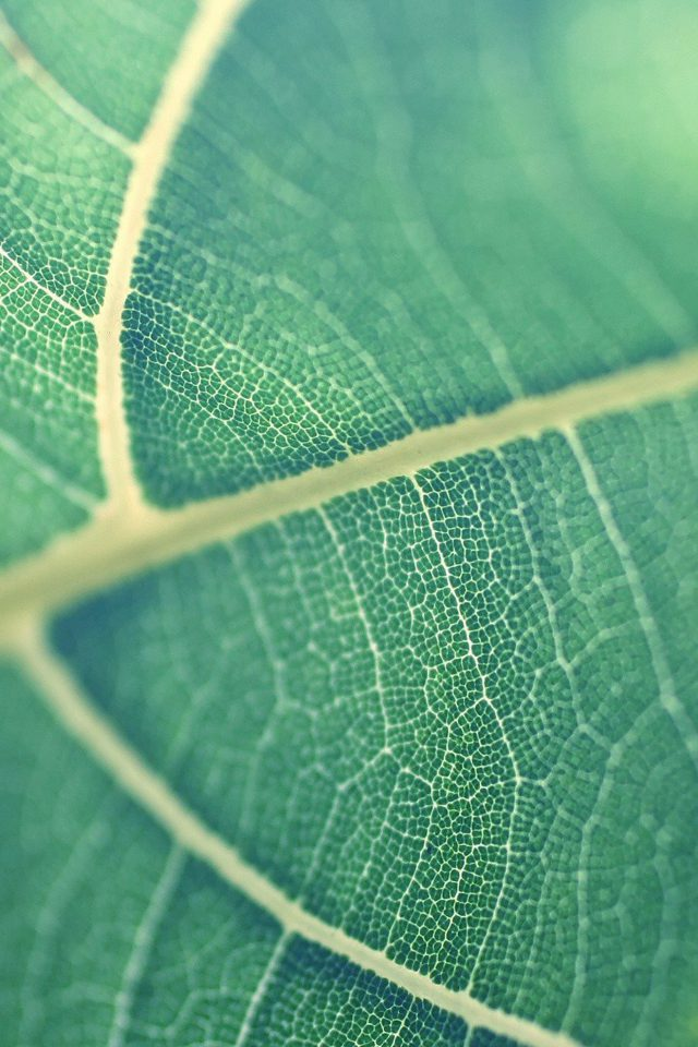 Leaf Bokeh Green Nature Android wallpaper