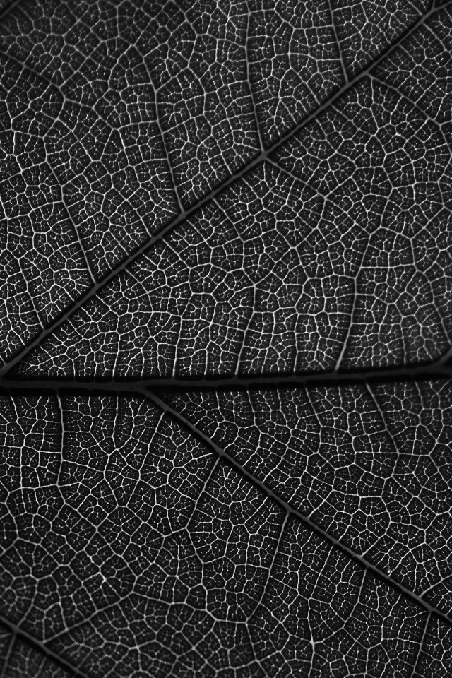 Leaf Dark Bw Nature Texture Pattern Android wallpaper