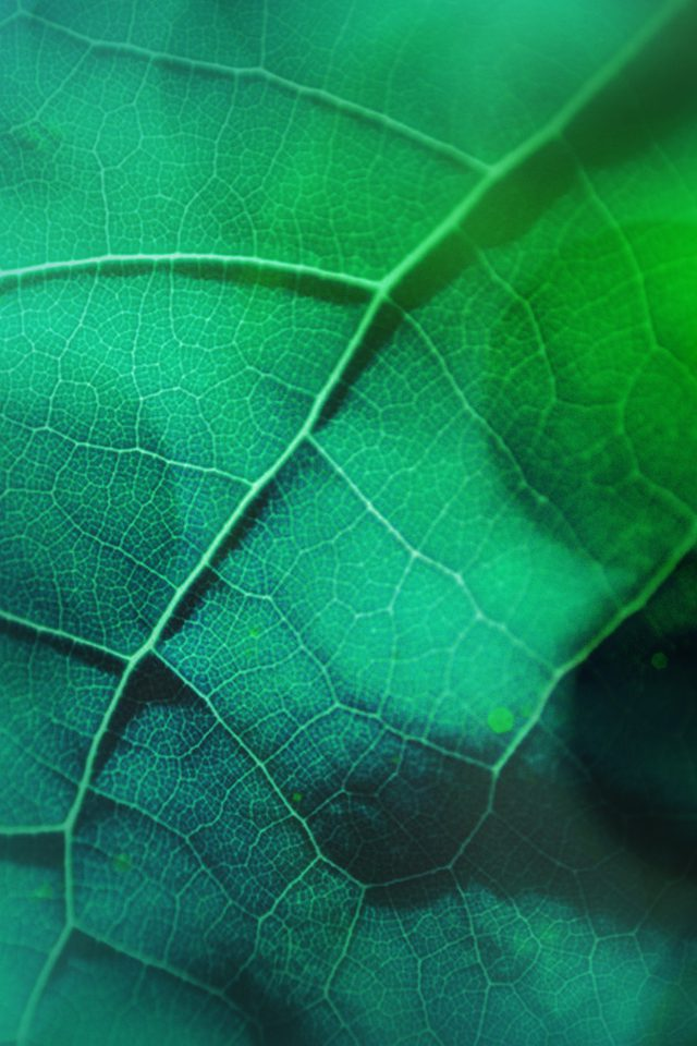 Leaf Flare Nature Green Wood Love Pattern Android wallpaper