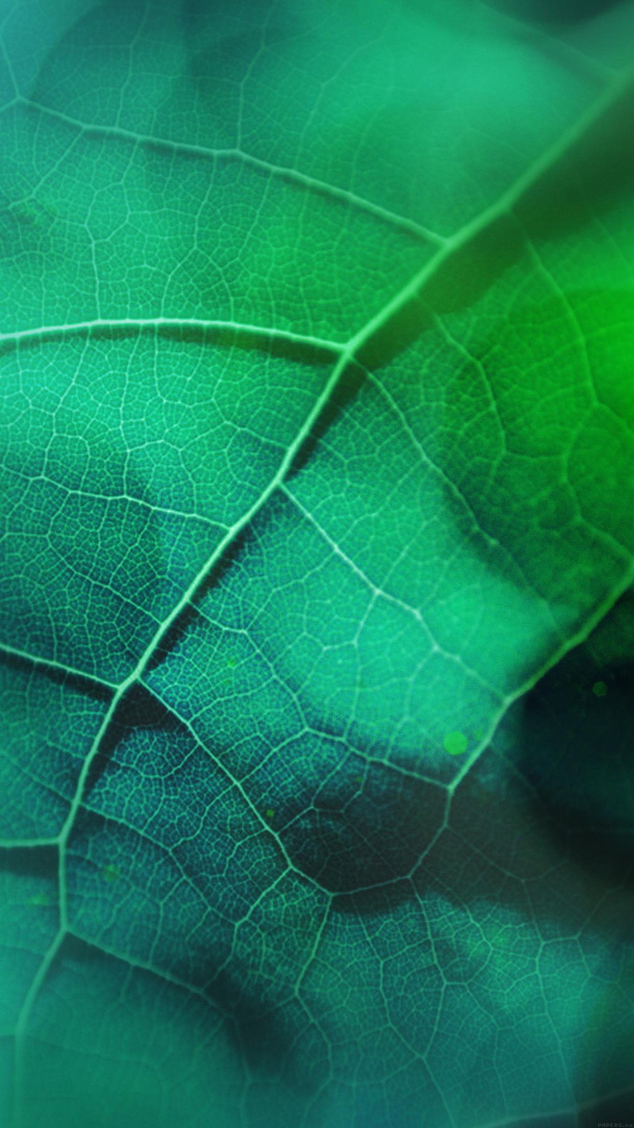 Good Wallpaper Love Green - Leaf-Flare-Nature-Green-Wood-Love-Pattern  Trends_5275.jpg