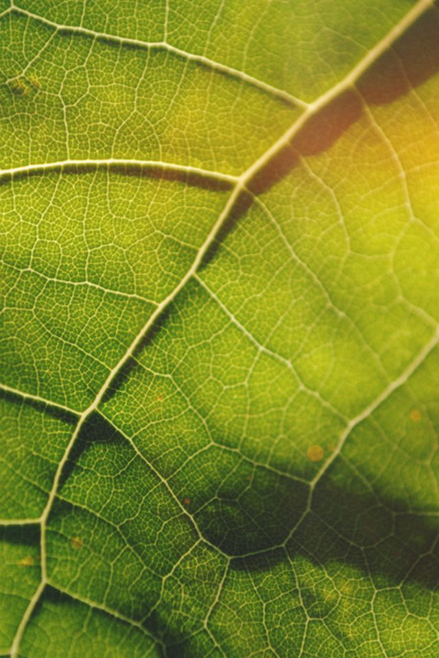 Leaf Flare Nature Wood Love Pattern Android wallpaper