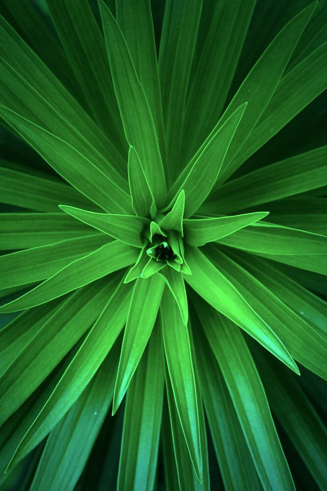 Leaf Flower Green Line Nature Android wallpaper