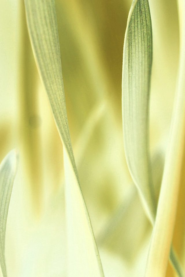 Leaf Grass White Bokeh Nature Android wallpaper