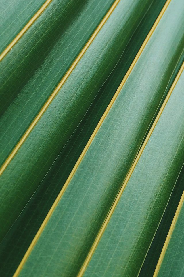 Leaf Green Line Nature Pattern Android wallpaper