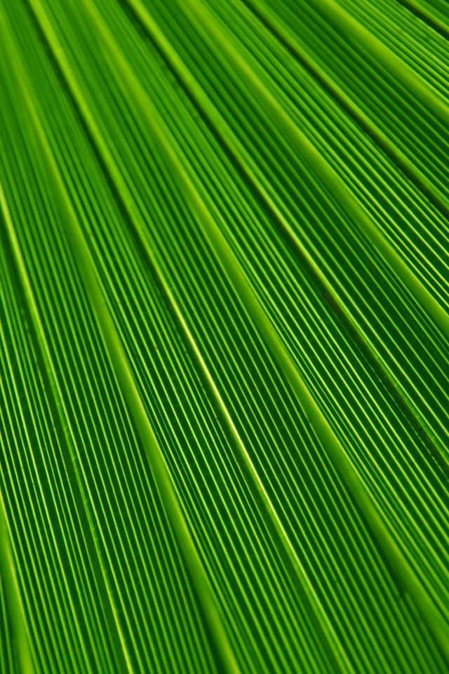 Leaf Green Surface Texture Nature Pattern Android wallpaper