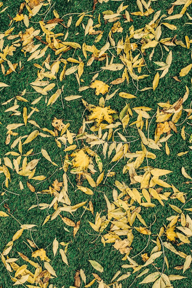 Leaf Lawn Nature Green Pattern Android wallpaper