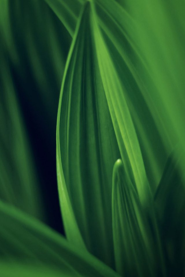 Leaf Nature Green Android wallpaper