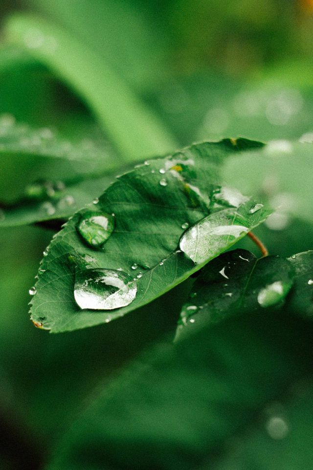 Leaf Rain Green Nature Forest Android wallpaper