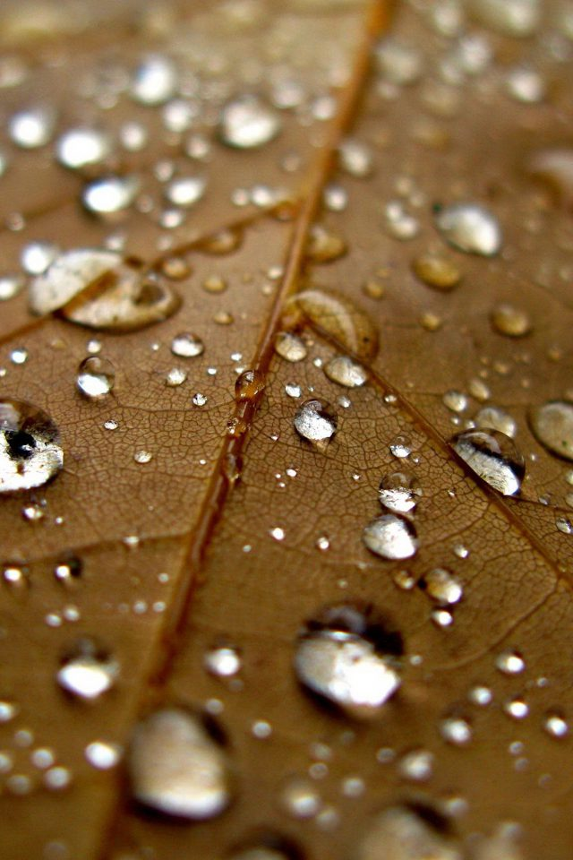 Leaf Rain Water Drop Bokeh Nature Android wallpaper