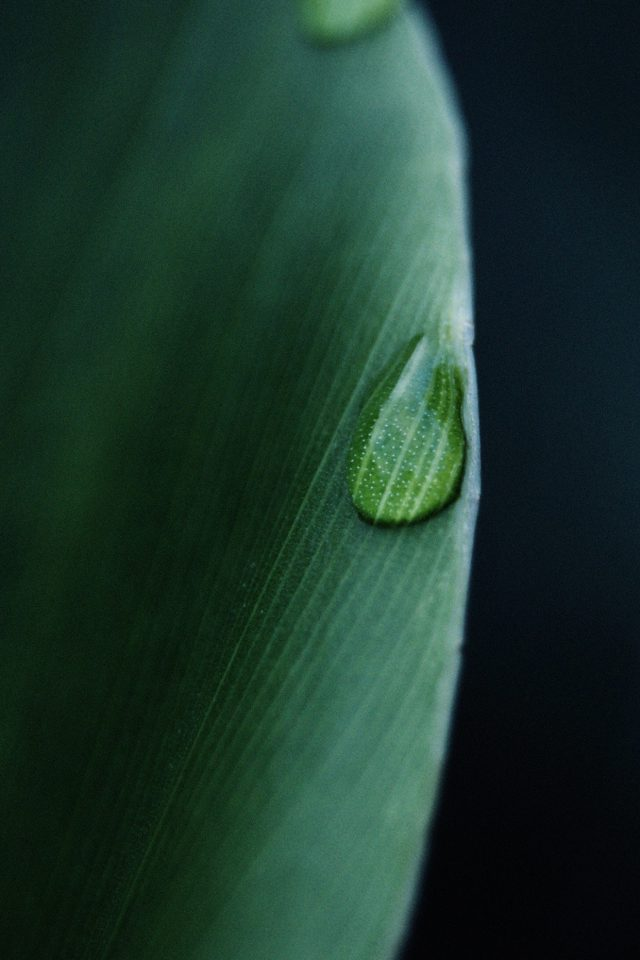 Leaf Raindrop Green Nature Android wallpaper