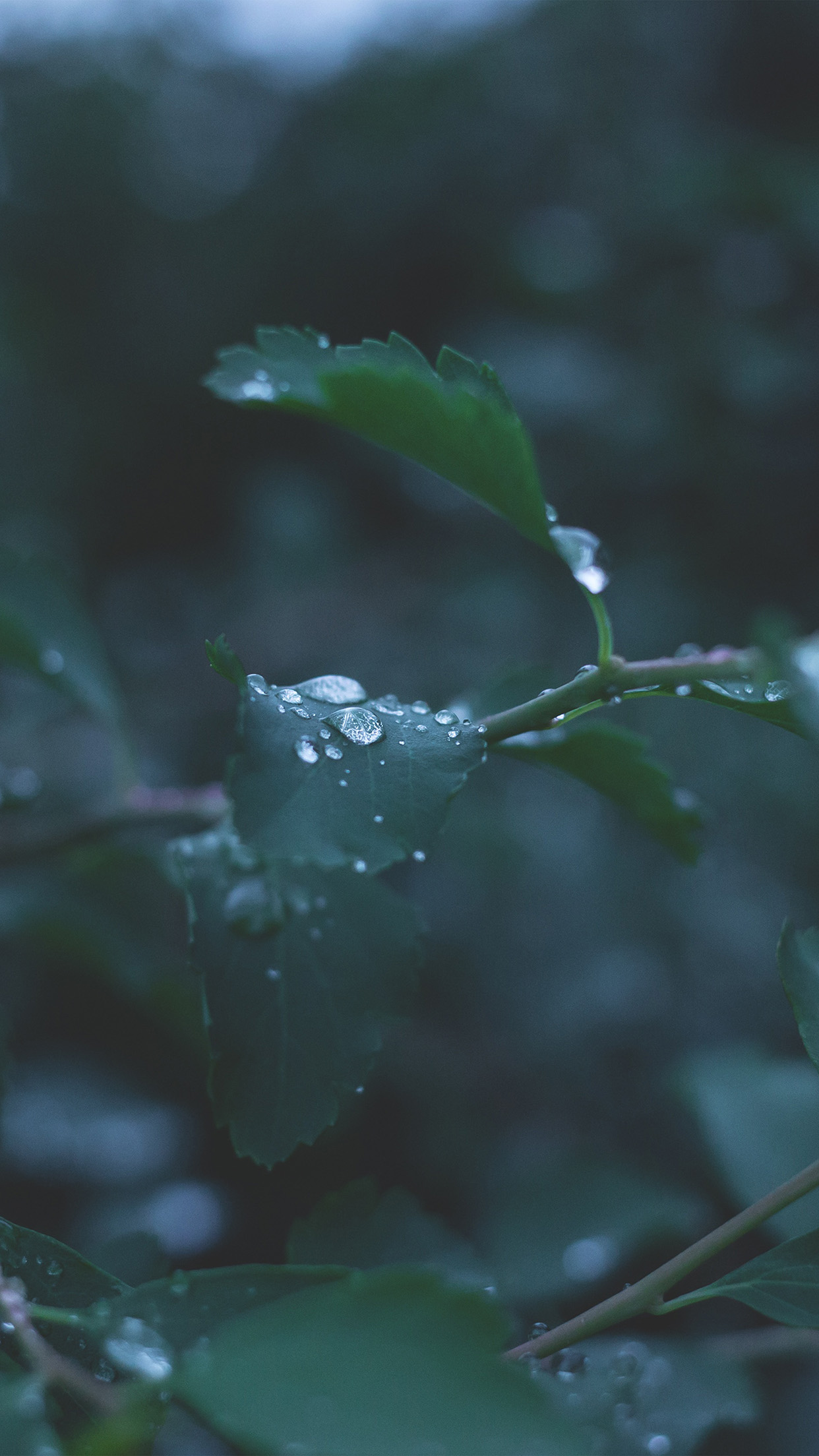 Leaf Water Rain Nature Green Android wallpaper