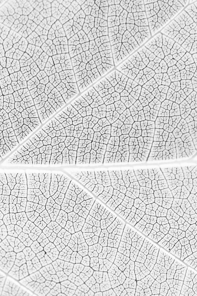 Leaf White Bw Nature Texture Pattern Android wallpaper