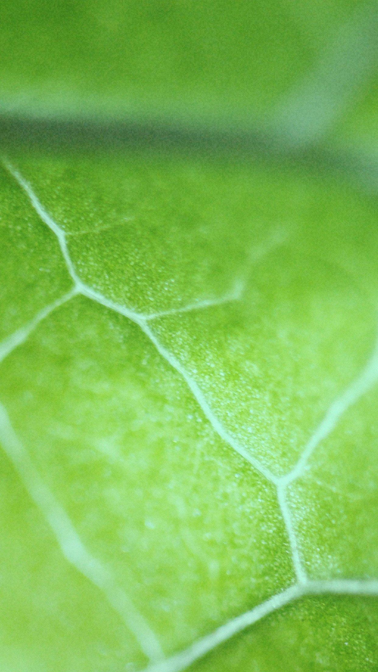 leaf zoom green nature bokeh