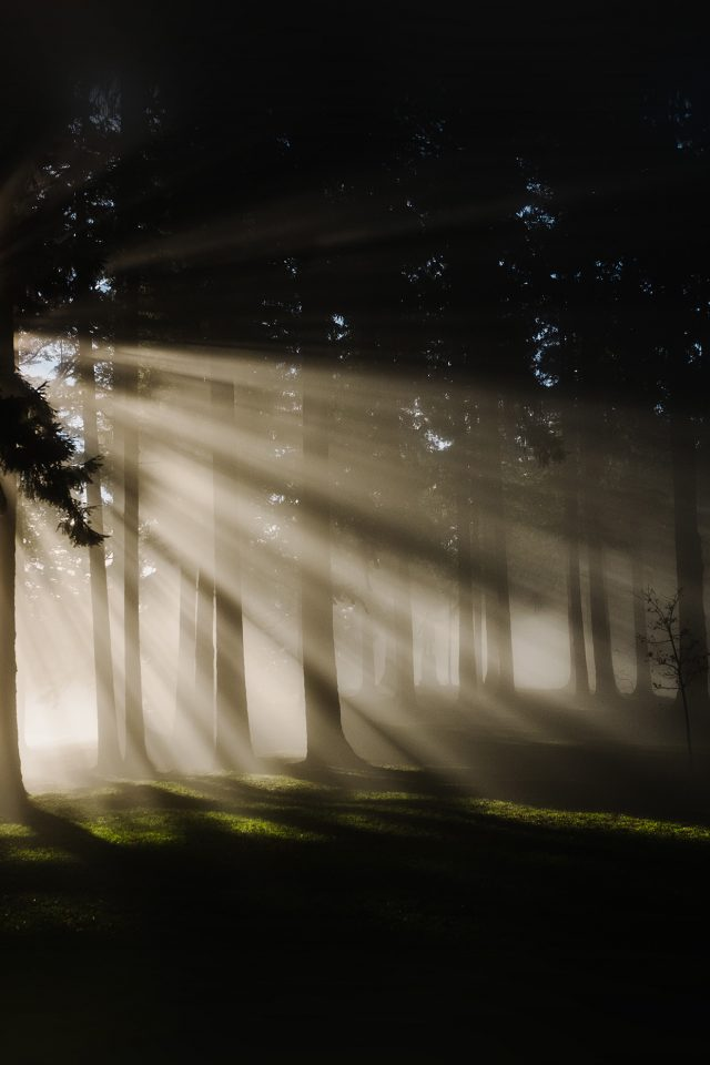 Light In Wood Forest Nature Shine Android wallpaper