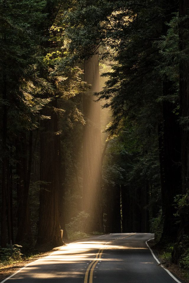 Sunrays Road Wood Forest Way Nature Android wallpaper