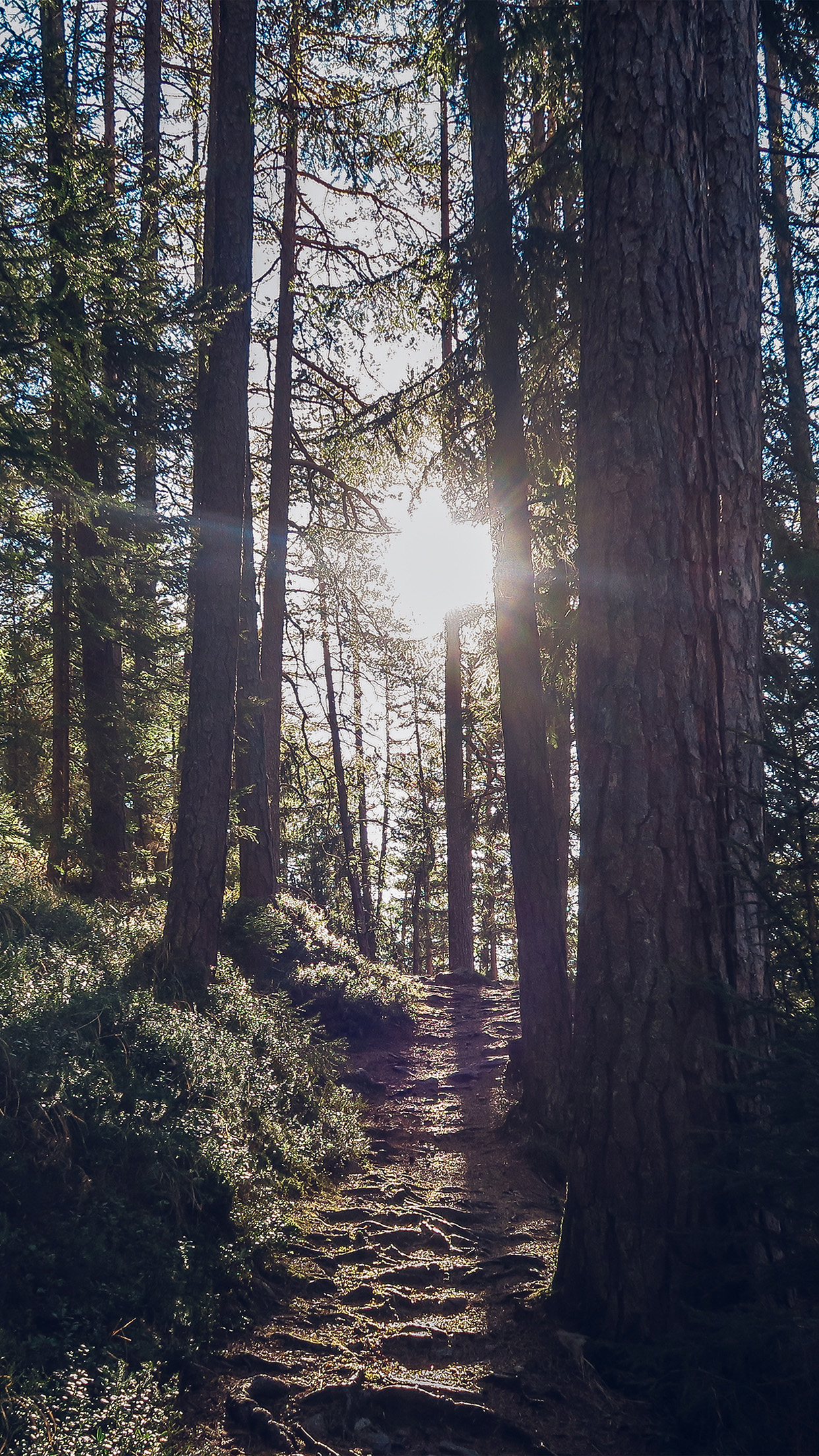 Light Wood Sun Forest Mountain Nature Android wallpaper
