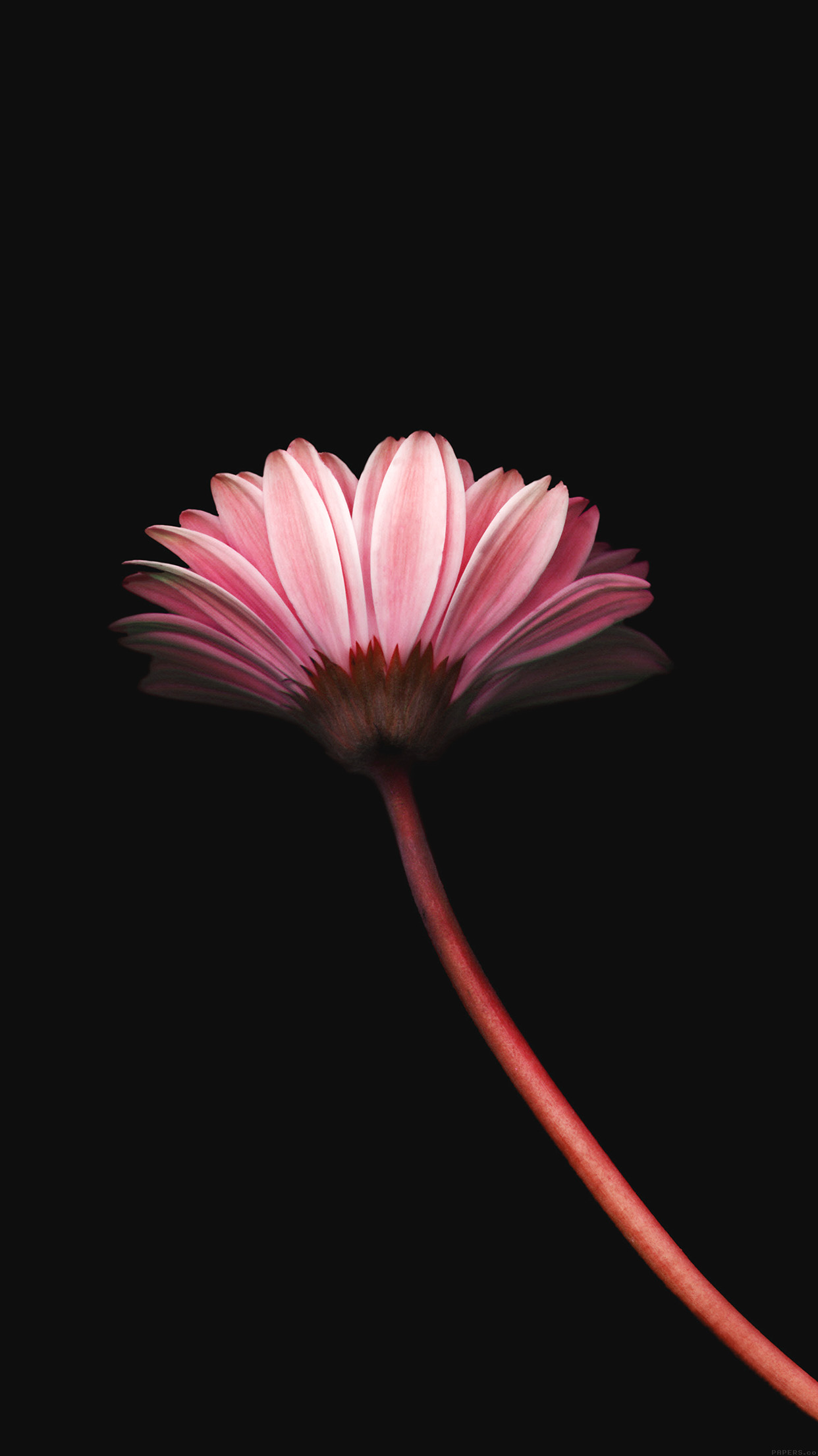 Lonely Flower Dark Red Simple Minimal Nature Android wallpaper