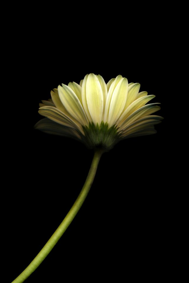 Lonely Flower Dark Simple Minimal Nature Android wallpaper