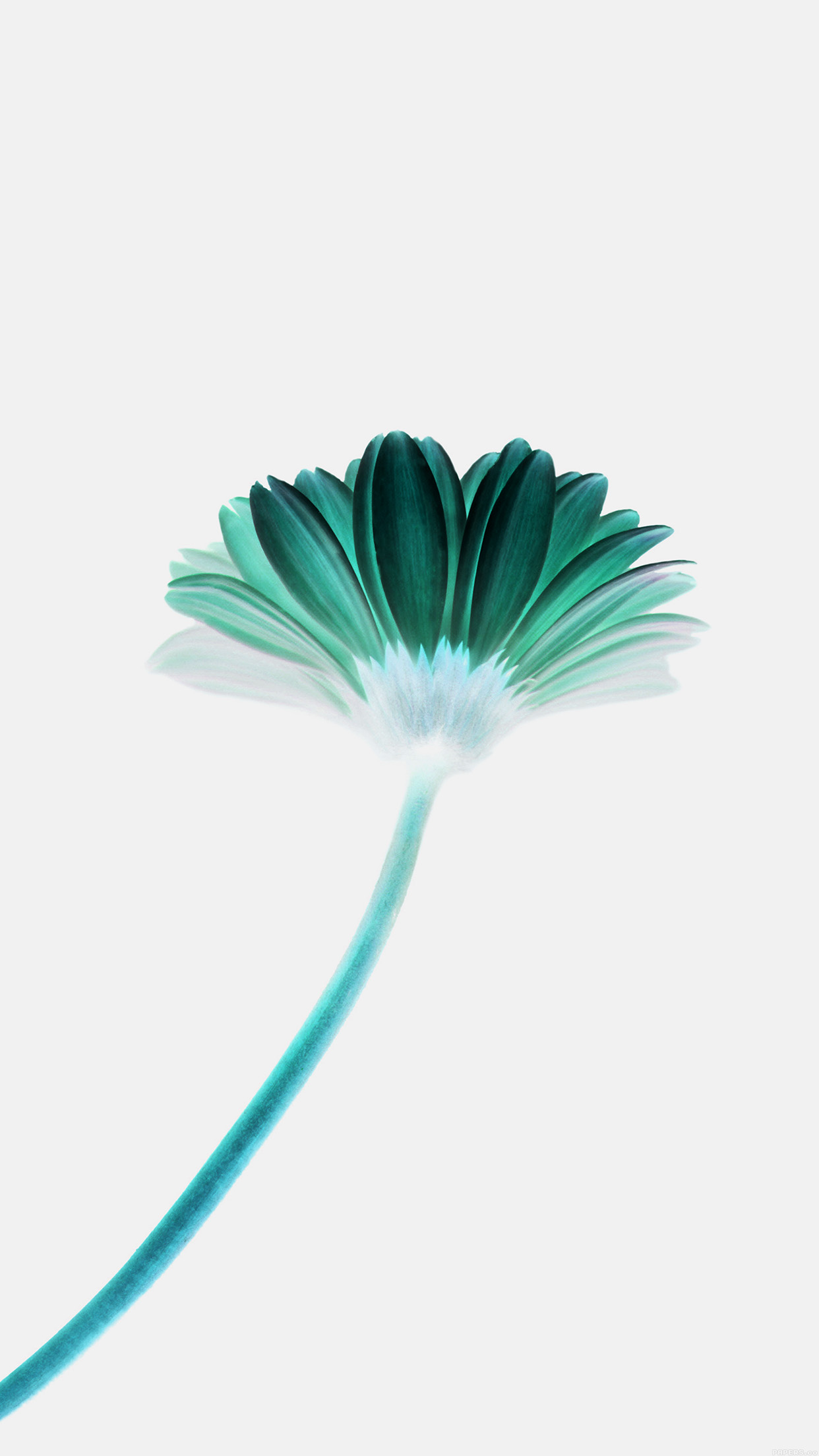Lonely Flower White Green Simple Minimal Nature Android wallpaper