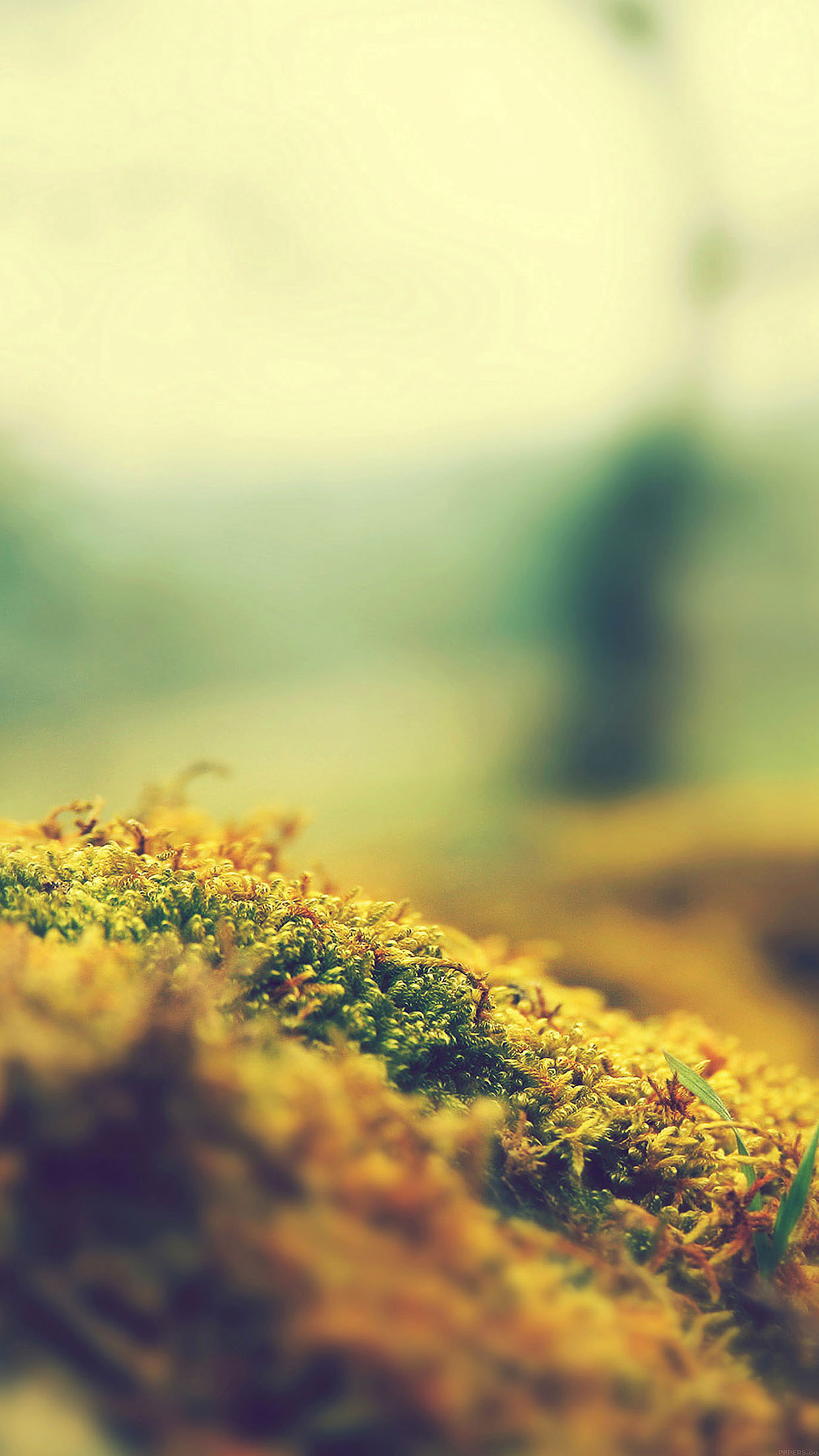 Lovely Moss Flower Nature Android wallpaper