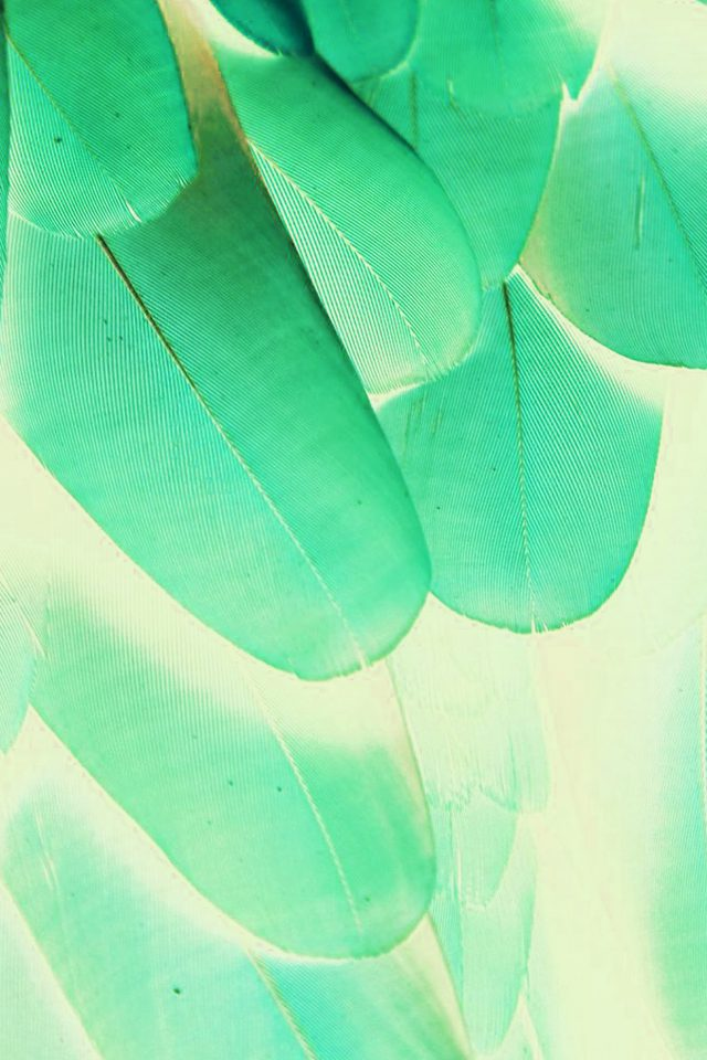 Meizu Feathre Green Blue Nature Texture Animal Pattern Android wallpaper