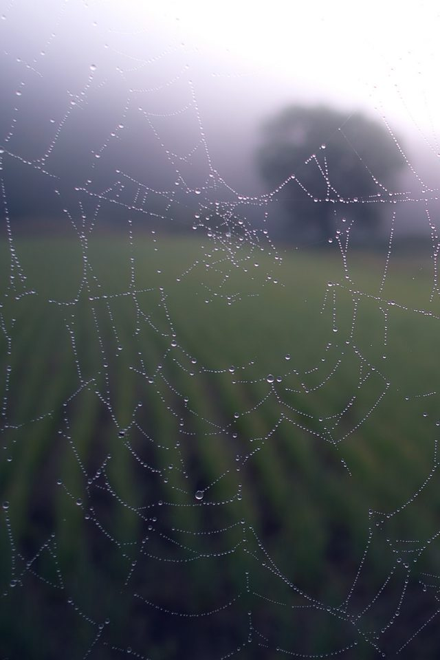 Morning Dew Spider Web Rain Water Nature Android wallpaper