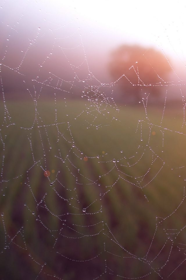 Morning Dew Spider Web Rain Water Nature Flare Android wallpaper