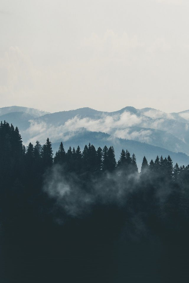 Mountain Fog Nature View Wood Forest Android wallpaper