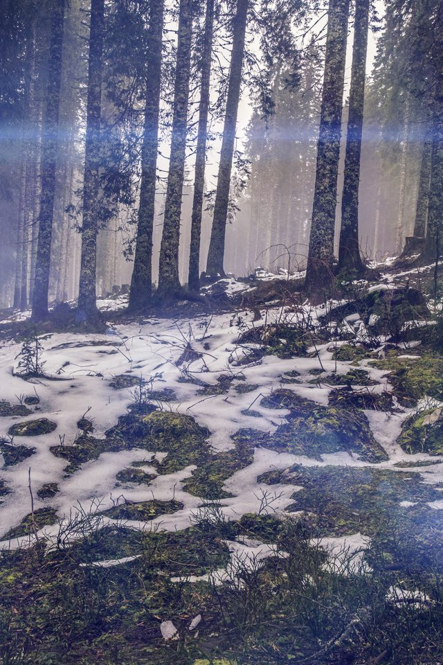 Mountain Snow Woods Nature Blue Flare Android wallpaper