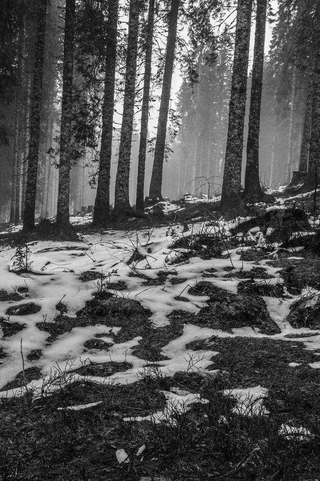 Mountain Snow Woods Nature Dark Bw Android wallpaper