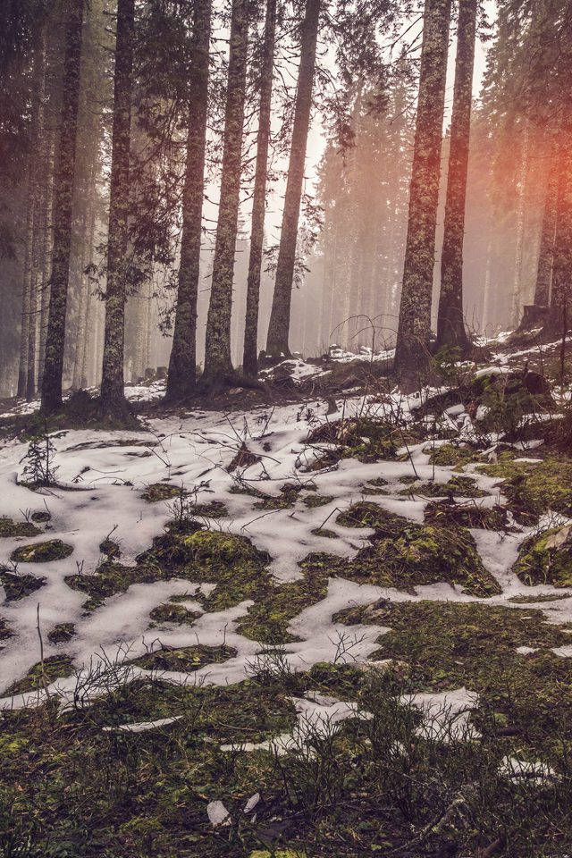 Mountain Snow Woods Nature Flare Android wallpaper