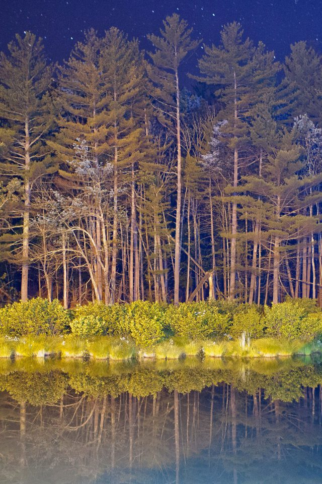 Night Wood With Lake Nature Android wallpaper