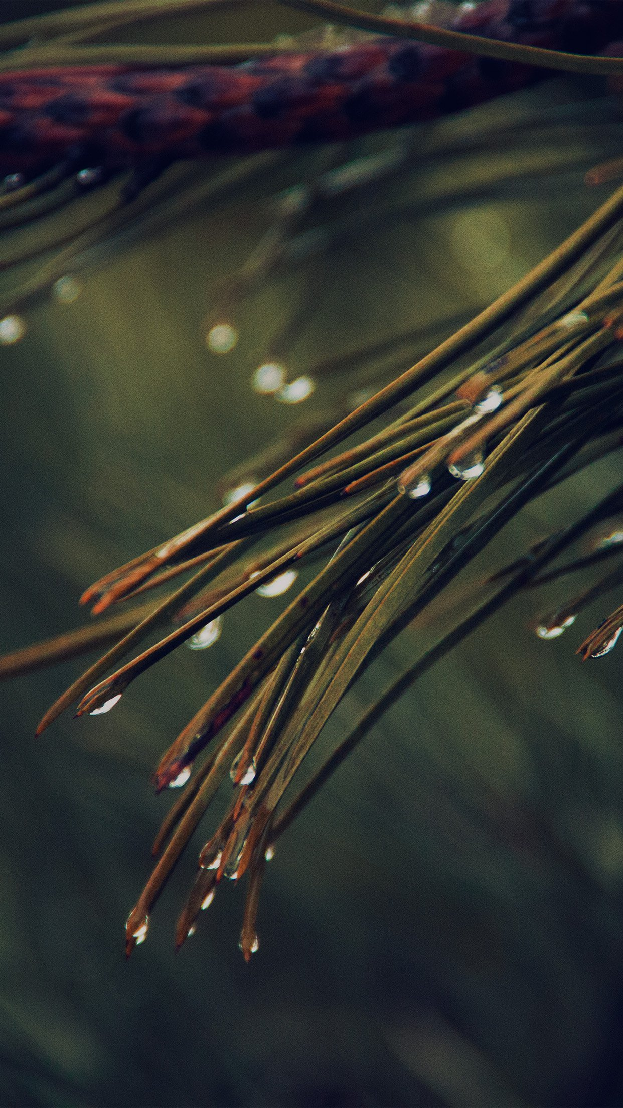 Rain Pine Tree Dark Green Nature Mountain Android wallpaper