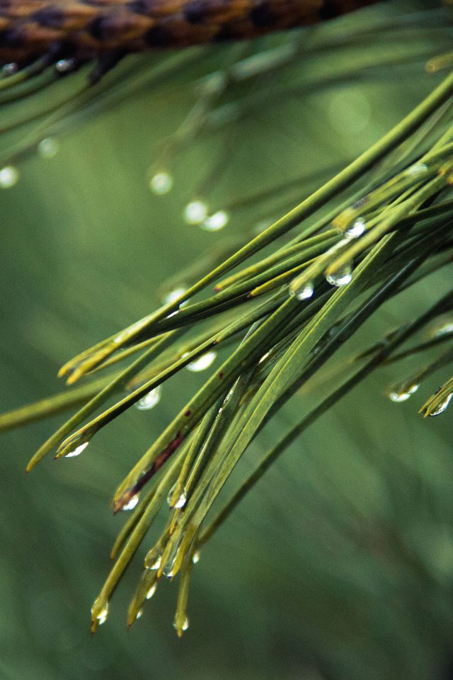Rain Pine Tree Green Nature Mountain Android wallpaper