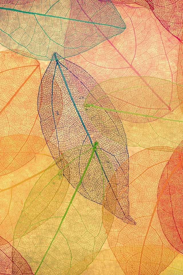 Rainbow Color Leaf Art Fall Nature Pattern Android wallpaper