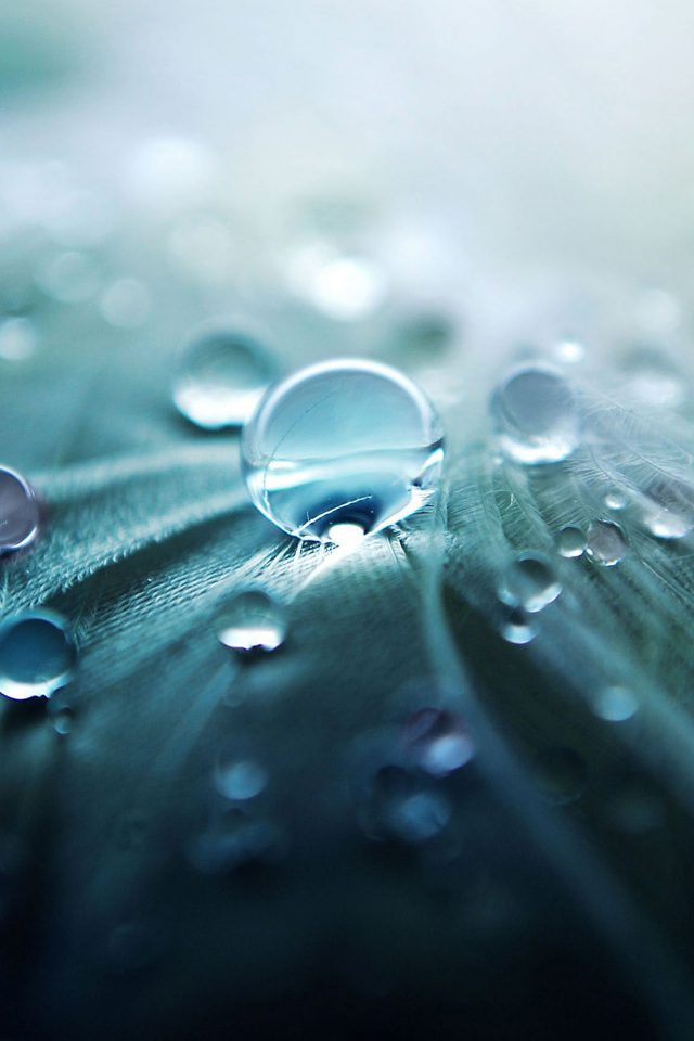 Raindrops Nature Leaf Art Green Android wallpaper