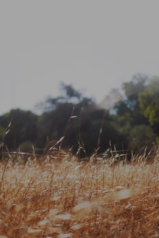 Rye Grass Field Bokeh Cool Mountain Cole Patrick Nature Android wallpaper